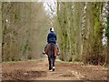 SP5705 : Horse riding on the bridleway by Steve Daniels