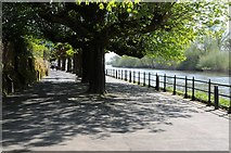 SO8454 : Pollarded trees beside the Severn by Philip Halling