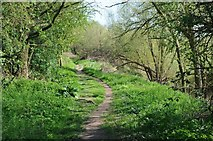 SO8452 : Footpath beside the River Severn by Philip Halling