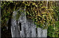 SN9063 : Icicles and moss in Llanerchi Wood by Andrew Hill