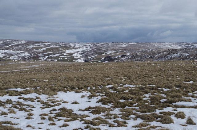Rhos y Gelynnen - open hill above the dense forest