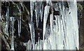 SN9063 : Cluster of icicles on rock by Andrew Hill