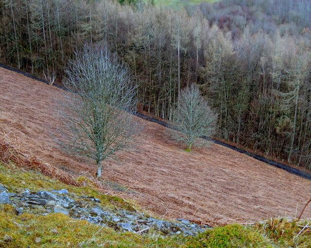 Steep Wye valley hillside