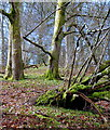 SO0060 : Hillside beech woodland by Andrew Hill