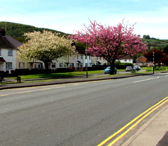 Late April blossom in Pontymister