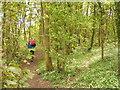SO8590 : Woodland Path by Gordon Griffiths