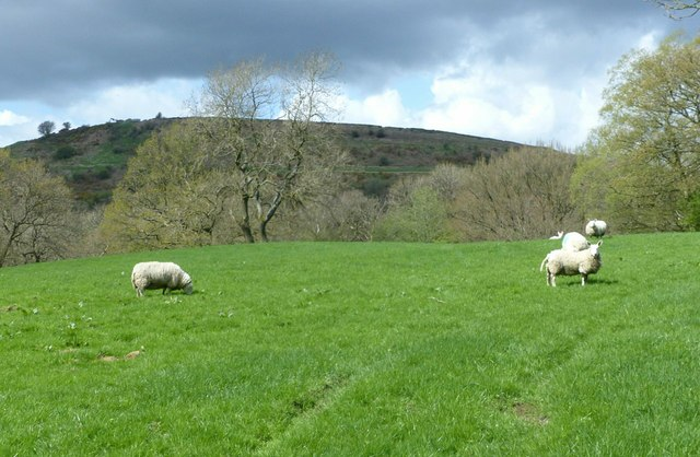 Lambing pasture near Pyegreave Farm