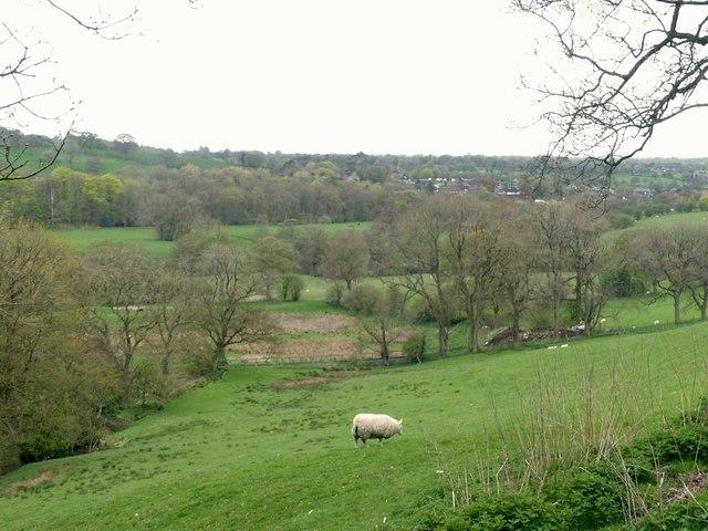 Near Pyegreave Farm