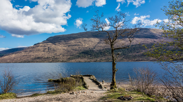 Tree and wee jetty on Loch Arkaig