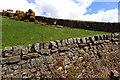 NS5875 : Circular sheep creep by Mick Garratt