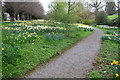 SE1691 : Daffodils in Burton Park by Roger Templeman