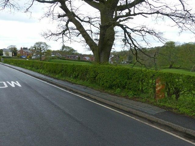 Hollin Lane, Sutton