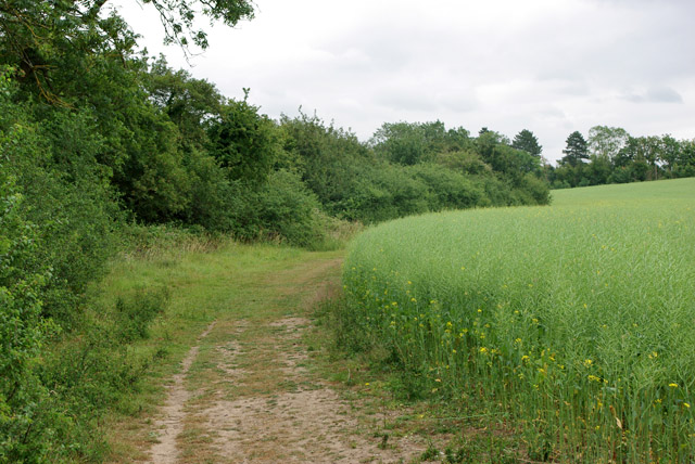 Footpath towards King's Mill Lane