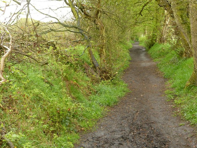 Footpath to Danes Moss Nature Reserve