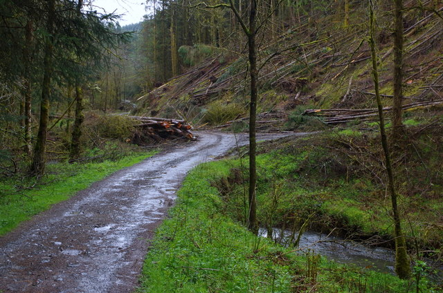 Valley track, track junction and stream, Crychan Forest