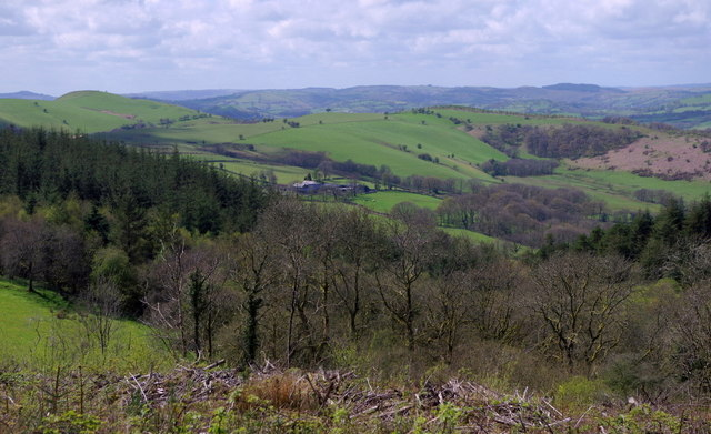 View from forest track after tree felling