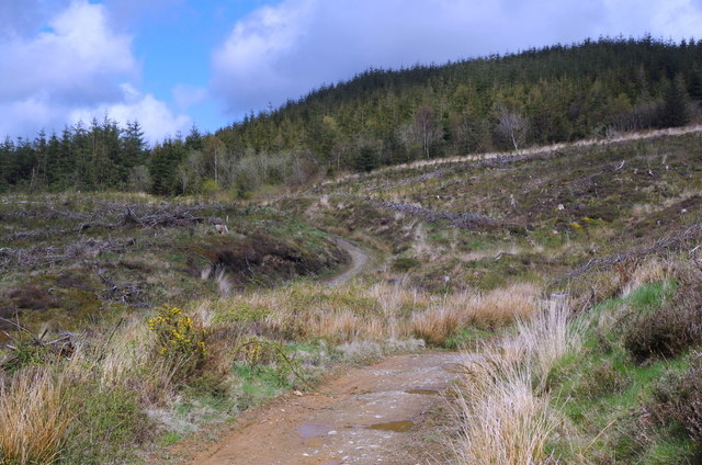 Forest track across cleared hillside