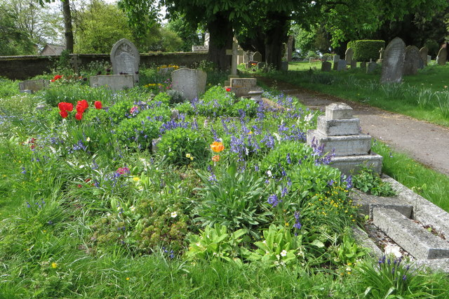 Bluebells in St Giles' churchyard
