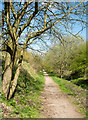 NZ3841 : Old railway route north-west of Shotton Colliery by Trevor Littlewood