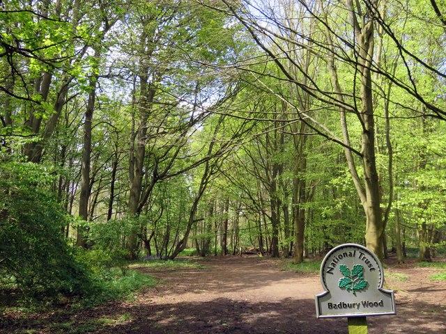 A track down into Badbury Wood