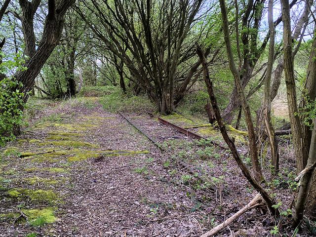 Overgrown Railway, Radcliffe North Junction