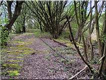SD7807 : Overgrown Railway, Radcliffe North Junction by David Dixon