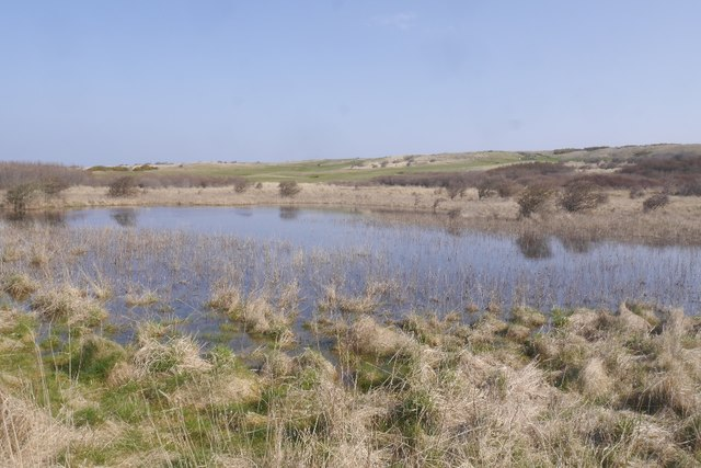 Flooded ground, Yellow Mires