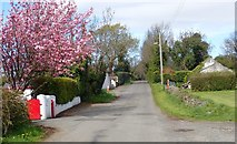 J3532 : Flowering cherry tree on Middle Tollymore Road by Eric Jones
