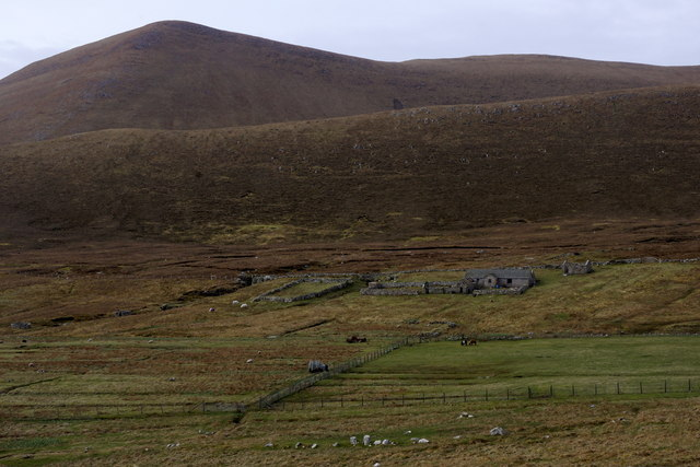 South Harrier, Foula