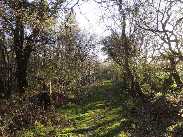 Bridleway to Tynreithin, Coed Alltfedw