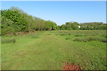 SX9066 : Nightingale Park looking NW along the boundary by John C
