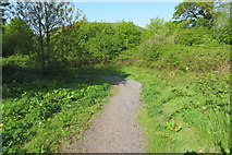 SX9066 : New woodland path by John C
