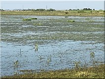 TL5392 : Shallow flood water - The Ouse Washes by Richard Humphrey