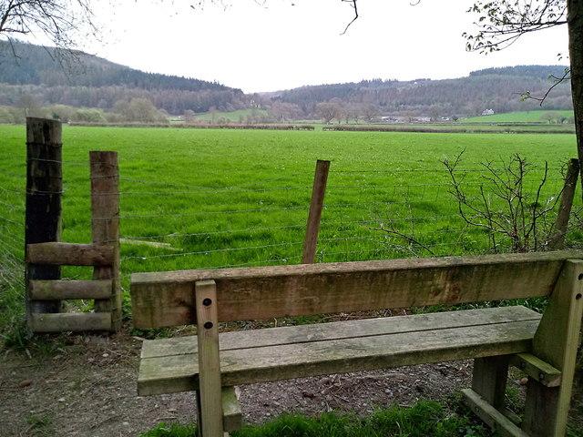Pasture in the Ystwyth valley, Gelli Ddu