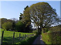 SO0647 : Narrow lane high above the River Wye by Andrew Hill