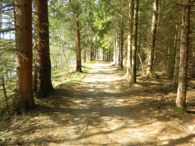 Footpath beside the Spey, near Craigroy