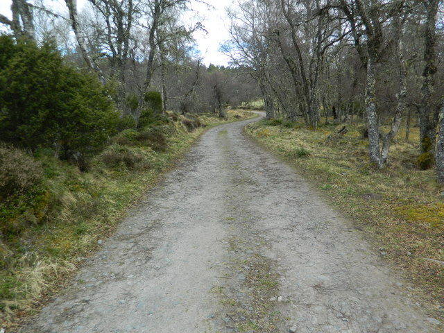 Track through Anagach Wood