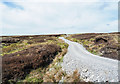 NY7927 : Hill road as Pennine Way by Trevor Littlewood
