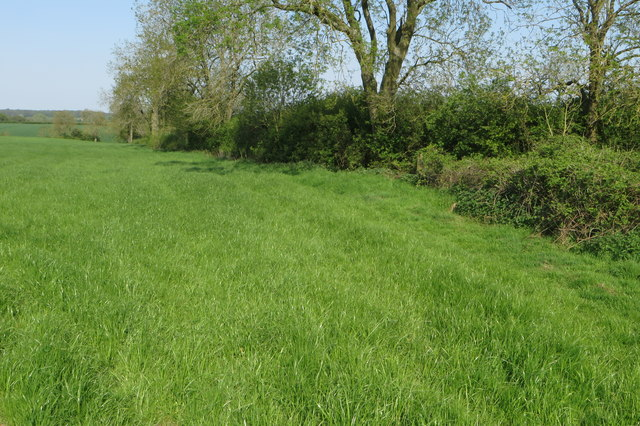 Field edge hedge by Woodgreen Farm