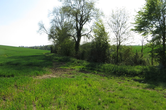 Trees by a farm stream