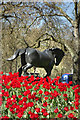 TQ2780 : Horse & Tulips by Des Blenkinsopp