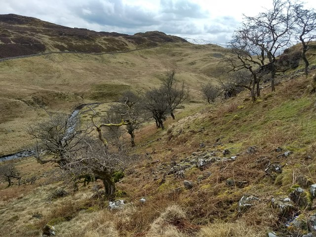 An ancient wood on the north-eastern slopes of Craig y Benglog