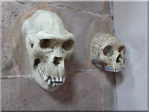 SJ8959 : Biddulph Grange - replica skulls by Chris Allen