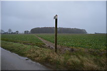 TR2254 : Footpath to Frith Wood by N Chadwick