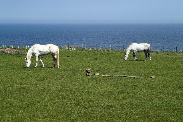 Horses at Sea House