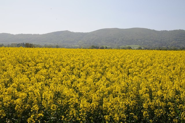 Oilseed rape and the Malvern Hills