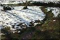 SX8963 : Stream, Cockington valley by Derek Harper