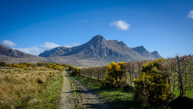 Path to Ben Loyal