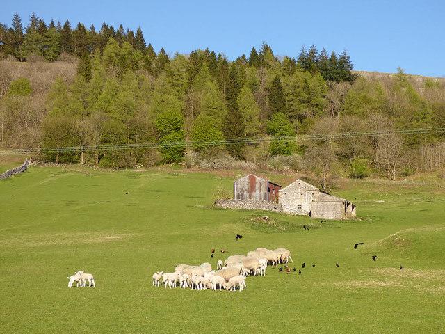 Animals' tea party below Crookacre Barn