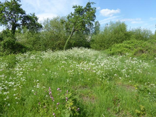 Down Barns Moated Site, Sharvel Lane